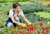 Los 7 mejores guantes de jardinería