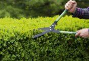 Las 7 mejores tijeras de podar para el jardín