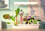 Los 7 mejores jardines hidropónicos de interior Smart Garden