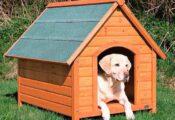 Las 7 mejores casetas para perros